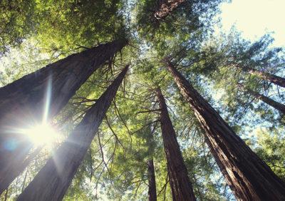 5 arbres à sauver en 2019