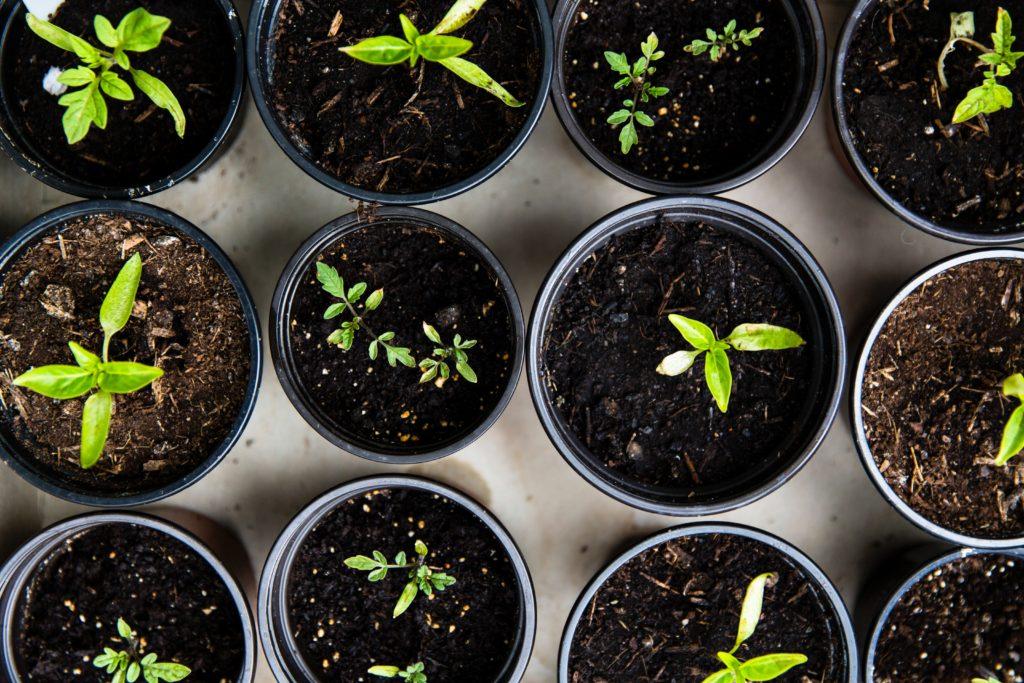 Pousse de plantes vertes
